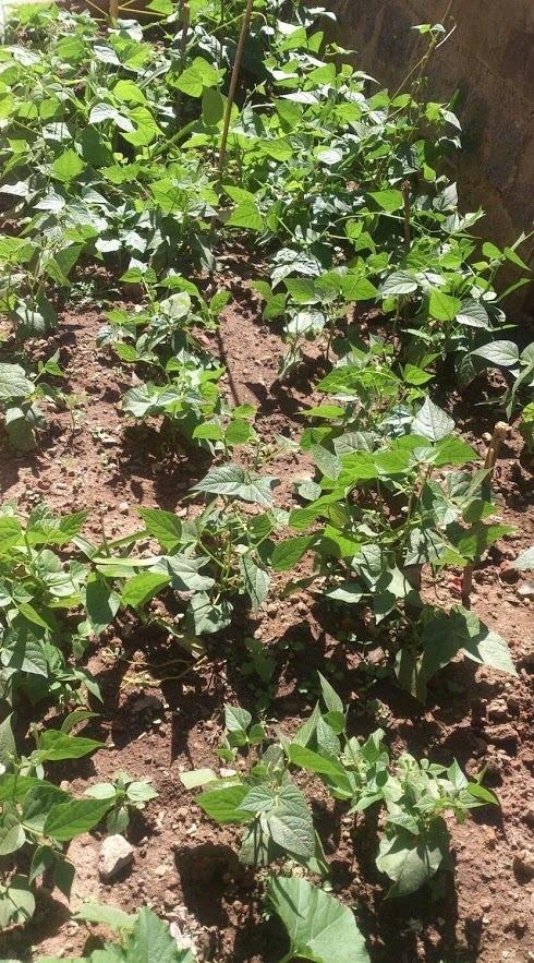 Jardin potager scolaire Epp Mahamasina